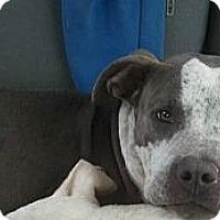 Adopt A Pet :: Clyde - Yakima, WA