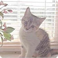 Adopt A Pet :: Puddifoot - Colmar, PA