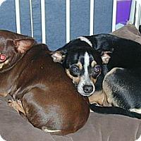 Adopt A Pet :: Mamacita - Homer Glen, IL
