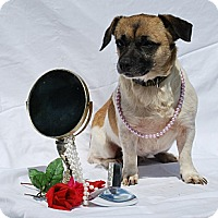 Pug Mix Dog for adoption in Harrodsburg, Kentucky - Precious