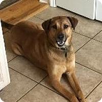 Adopt A Pet :: Johnny - Mahopac, NY