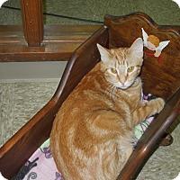 Adopt A Pet :: Rummy - Medina, OH
