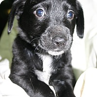 Adopt A Pet :: Indy - Foster, RI