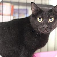 Adopt A Pet :: Miranda - Brooklyn, NY