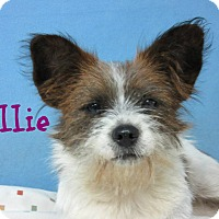 Adopt A Pet :: Ellie - Brazil, IN