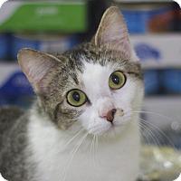 Adopt A Pet :: Tina - Sioux Falls, SD