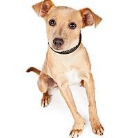 Adopt A Pet :: Lori - Scottsdale, AZ