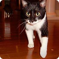 Adopt A Pet :: Clover - Nashville, TN