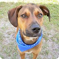 Adopt A Pet :: Raider - Umatilla, FL