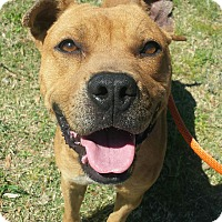 Adopt A Pet :: Beyla - Macon, GA