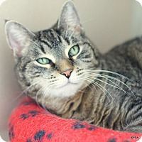 Adopt A Pet :: Marge - East Hartford, CT