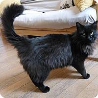 Adopt A Pet :: Sebastian - Anacortes, WA
