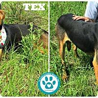 Adopt A Pet :: Tex - Kimberton, PA