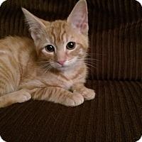 Adopt A Pet :: Hailey - North Brunswick, NJ