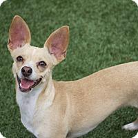 Adopt A Pet :: Jess - Chula Vista, CA