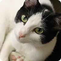 Adopt A Pet :: Trixie - Medina, OH