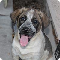 Adopt A Pet :: Tobie - Phoenix, AZ