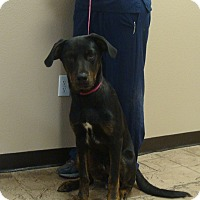 Adopt A Pet :: Titan - Oviedo, FL