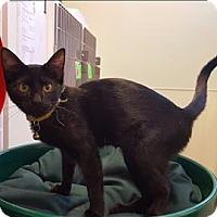 Adopt A Pet :: Cupcake - Neosho, MO