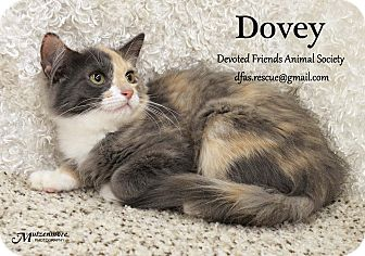 Calico Kitten for adoption in Ortonville, Michigan - Dovey
