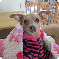 Adopt A Pet :: Sweet Pea - Baltimore, MD