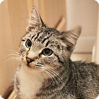 Adopt A Pet :: Romeo - Los Angeles, CA