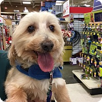 Adopt A Pet :: Cody - Cleveland, OH
