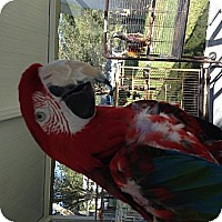 Adopt A Pet :: Greenie - Punta Gorda, FL
