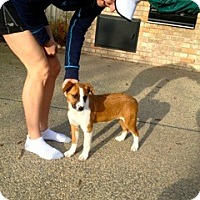 Adopt A Pet :: Jasmine - Fresno, CA