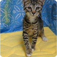 Adopt A Pet :: Ren - Orlando, FL