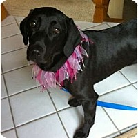 Adopt A Pet :: RUBY - Minnetonka, MN