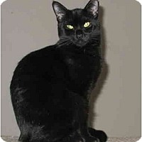 Adopt A Pet :: JoJo & Jamie - Cincinnati, OH