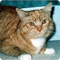 Adopt A Pet :: Yukon - Medway, MA