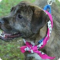 Adopt A Pet :: Jazzy - Marlton, NJ