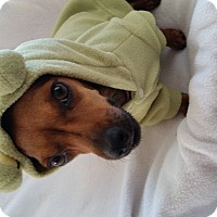Adopt A Pet :: Opal - Marietta, GA