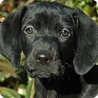 Adopt A Pet :: Wynnie - Chattanooga, TN