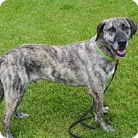 Adopt A Pet :: Merlin - Piqua, OH