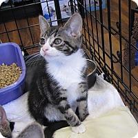Adopt A Pet :: Anna - bloomfield, NJ