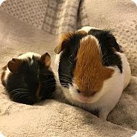 Adopt A Pet :: Penelope & Ladybug - Fullerton, CA