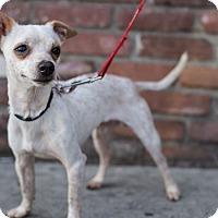 Adopt A Pet :: Harry - Encino, CA