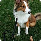 Adopt A Pet :: Dexter (Medical HOLD)