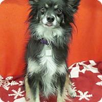 Adopt A Pet :: Gizmo - Mukwonago, WI