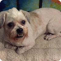 Adopt A Pet :: Fritz - Long Beach, NY