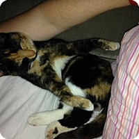 Adopt A Pet :: Fifi, aka Mimi - Plain City, OH