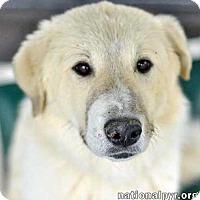 Adopt A Pet :: Sasha /coming to NY - new! - Beacon, NY