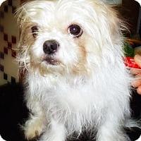 Adopt A Pet :: Ellie - Toronto, ON