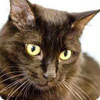 Adopt A Pet :: Brilla - Oakland Park, FL