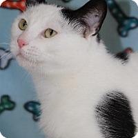 Adopt A Pet :: Mars - Grants Pass, OR