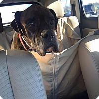 Adopt A Pet :: Limmony - Austin, TX
