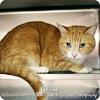 Adopt A Pet :: Feetsie - Appleton, WI